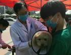 贵阳宠物医院-贵阳正规的宠物医院-牧济堂动物医院