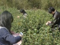 上海杭州临安天目农家乐春游、踏青、采茶、钓鱼、露营