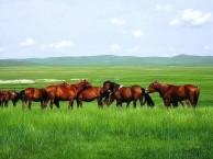 去内蒙草原旅游
