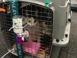 安庆托运宠物到南宁专业宠物托运业务