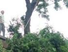 北京移树 移树电话 全北京承接移树工程