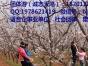 平谷石林峡或天云山景区+真人CS+自助烧烤二日游
