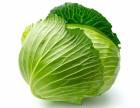 苏州蔬菜种植配送专家苏州润汇农业