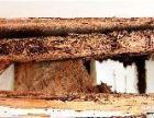 东莞白蚁防治中心 东莞白蚁防治中心 东莞白蚁防治中心