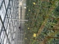 北星大道二段专业种植大棚低价出租设施设备齐全