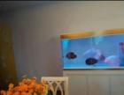深圳美达轩美达轩水族连锁有限公司鱼缸工厂专业定做各种常规鱼缸