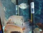 家养热带鱼找新家