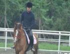 马匹出租承接活动全城较低价