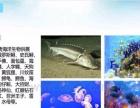 关于景观海洋生物展租赁价格提供海狮表演展览