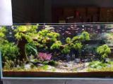 全市清洗鱼缸消毒鱼缸维护鱼缸造景海缸淡水缸定做