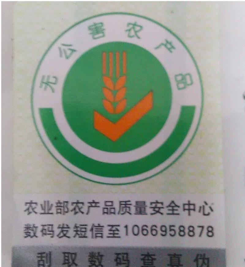 钓小龙虾虾稻共生上海奉贤平庄路海民南北路向南