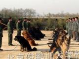 宠物训练宠物犬训练,护卫犬训练到北京俊鹏训犬学校