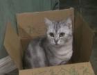免费寄养猫咪