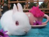 宠物兔低价出售一大批