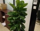 植物墻,仿真植物墻,辦公室 商場 酒店 企事業單位綠化設計