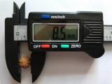 供应粒径8-45mm美国猴头核桃