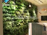 室内外绿植墙 植物墙花盆 墙体垂直绿化 自动循环浇灌墙体绿化