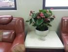 广州植物那�r候我��把他�舫芍��租摆 植物租赁 花卉租赁 植物出租供应 报价