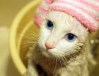 平阴宠物猫洗澡服务公司,雷欧宠物得到业内好评