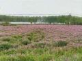 江宁湖熟龙都双新村有机农田家庭农场