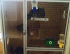 由于工作原因不方便照顾,出售自家3只龙猫还有一个订制笼子