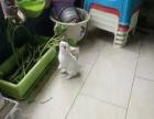 宠物兔,熊猫兔,成年兔。各种兔子