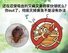 上海灭白蚁公司专业捕老鼠餐馆灭蟑螂