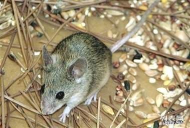 潍坊酒店灭鼠