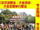 鼎峰狗场繁殖基地出售 顶级铁包金藏獒幼犬 皇者风范