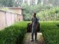 安阳专业除虫除蚁、跳蚤消杀灭跳蚤臭虫灭白蚁灭老鼠