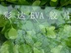 天津最好的低温透明EVA胶片