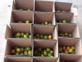 柑橘,脐橙,纽荷尔,红心柚,蜜柚,代购代销