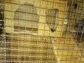 龙猫实木柜笼