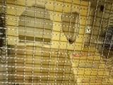 龙猫加柜笼加蓝盆标笼