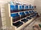 旗进水族专注于上海鱼缸定制、大型鱼缸定制市场开阔