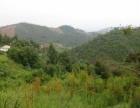 楚雄至牟定方向13公路处100亩山林急售价格好商量
