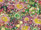 全涤印花布料厂长期批发 各种经典全涤印花