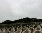 广东潮汕地区风水最好的公墓莲花山灵安墓园