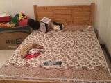 矮木床 薄床垫