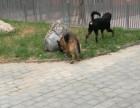 京广桥家庭寄养宠物猫猫狗儿 泰迪 比熊 贵宾 博美犬寄养可接