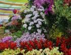 花卉出租园艺设计 /绿植养护 绿植盆栽 园林养护/绿植养护