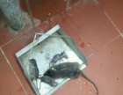 南宁市专业保洁、灭四害除四害灭鼠杀虫公司