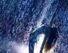 雨屋鲸鱼岛乐园彩色跑地板钢琴等道具租售,欢迎预订!