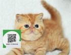 沈阳哪里有加菲猫出售 沈阳加菲猫价格 加菲猫多少钱