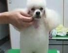 学习宠物美容培训工作室