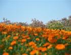 东莞农家乐松湖生态园东莞醉美最好的地方推荐松湖生态园