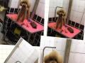 宠物宝宝十年店庆洗澡美容优惠活动