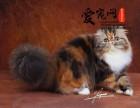 华东区最大波斯猫基地 上海爱宠网 签协议的保证