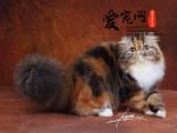 上海爱宠网品牌猫舍 多只加菲猫挑选 纯种健康签协议