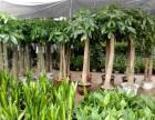 免费配送花卉绿植,室内花卉盆栽租赁 零售